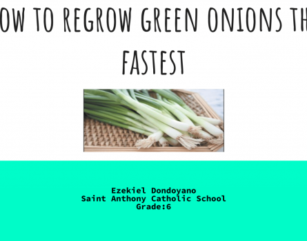 How-to-Regrow-Onions-1-1920x1080